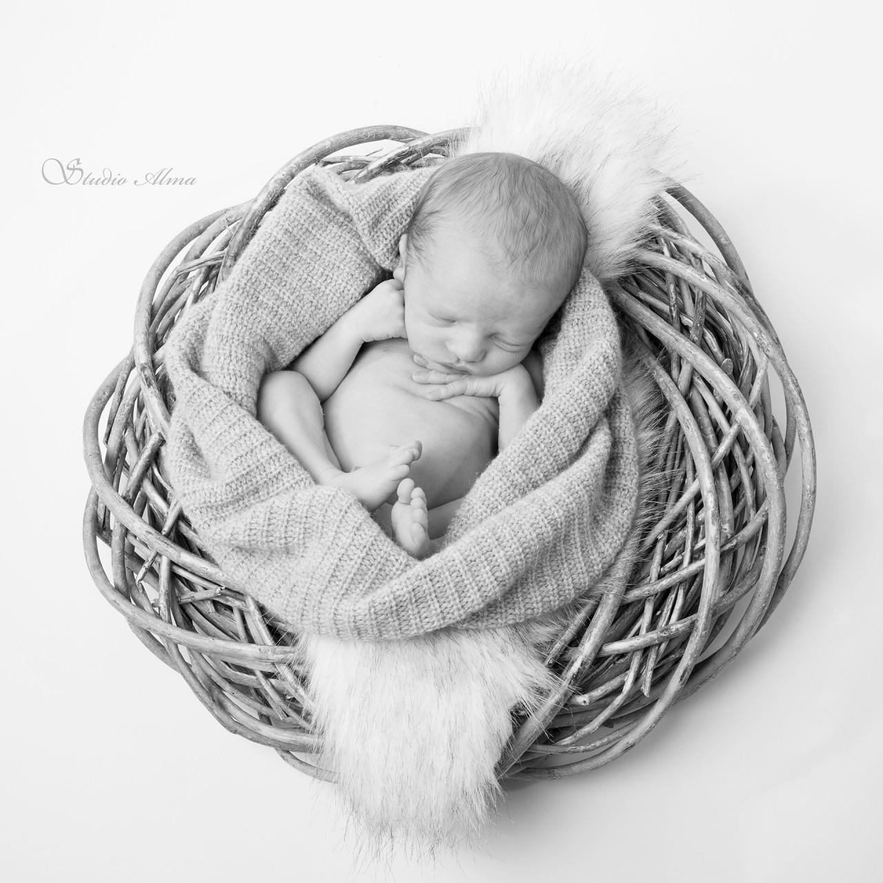 nyfødt-matheo-studioalma-rede